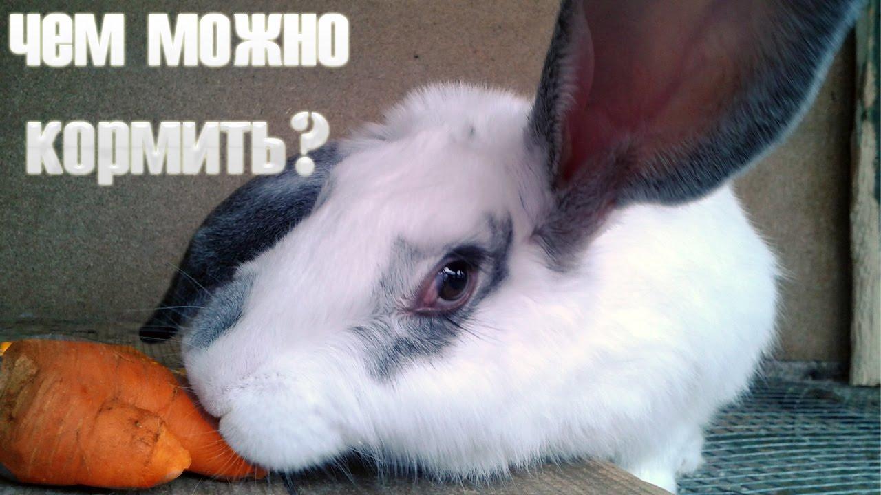 Кормление кроликов в домашних условиях: что должно входить в 64