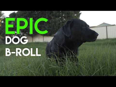 EPIC SLOW MOTION B-ROLL (OF CUTE DOG) from YouTube · Duration:  47 seconds