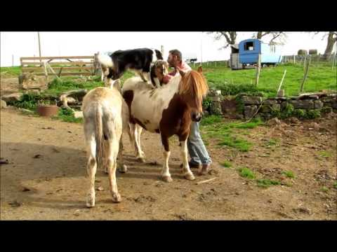 Les chiens sur l 39 ne et le cheval youtube - Tchoupi et le cheval ...