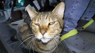 【地域猫】9月のノミ・ダニ・寄生虫駆除‼勘のいいスラリン隊員は強敵だが食い意地に負けるところに付け入る隙あり‼【魚くれくれ野良猫製作委員会】
