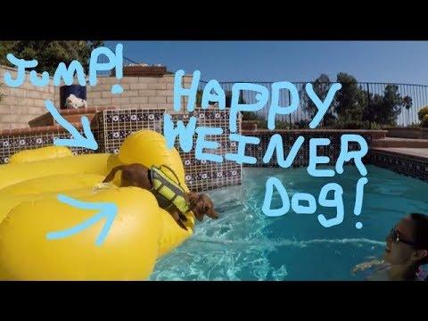 Happy Weiner dog