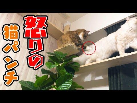 ちゃちゃが珍しくマロンに猫パンチをお見舞い!?