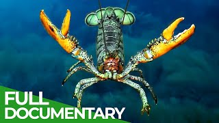 Lobsters - Noble Knights of the Ocean | Free Documentary Nature