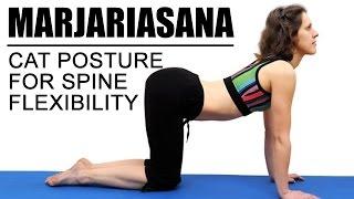 Marjariasana (Cat Pose)   for spine flexibility