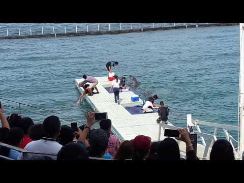 Ocean Adventure: Dolphin Tales - Subic Bay