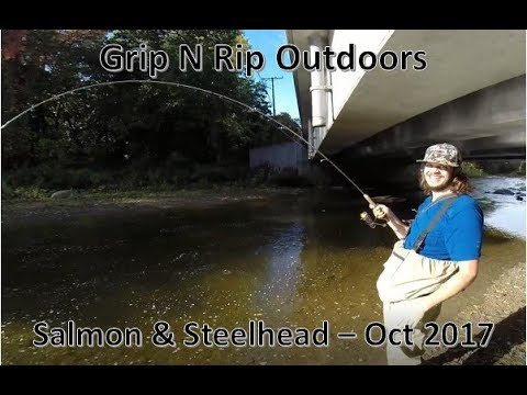 Great lakes salmon and steelhead fishing october 2017 for Free fishing day 2017 pa