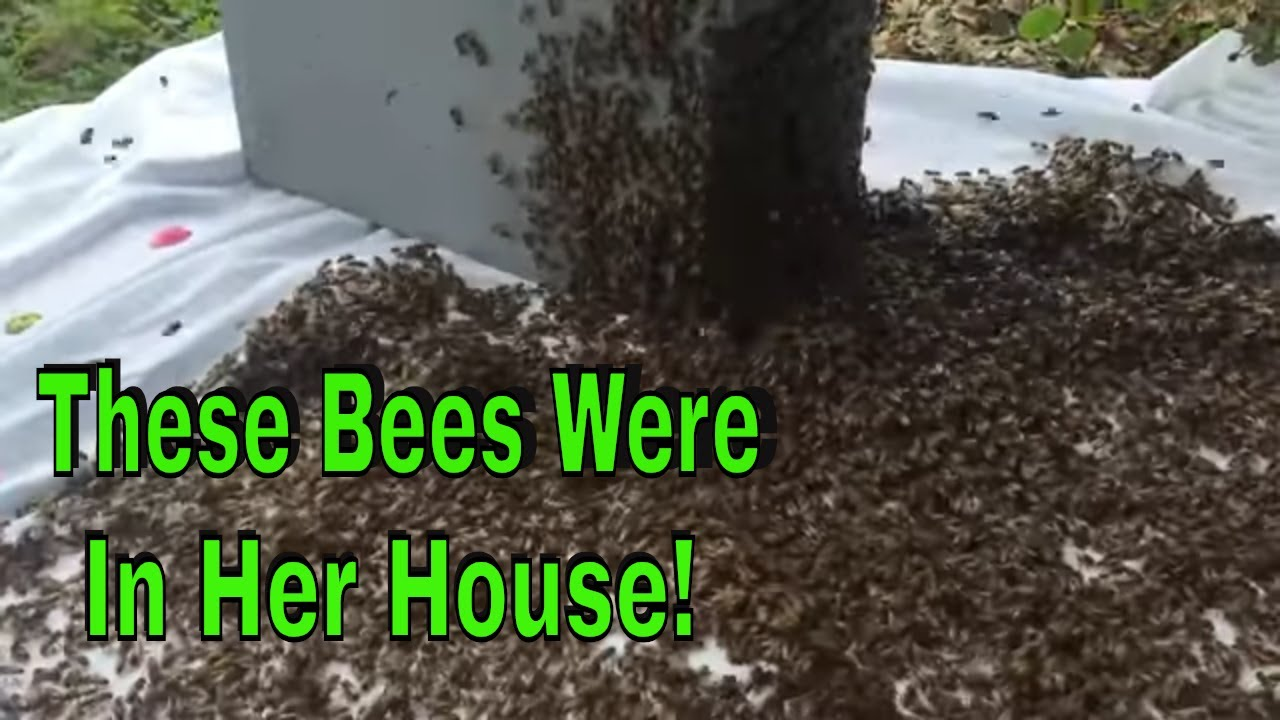 Forcing Honey Bees Out Of Her House!