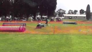 Nadac Agility Geelong !st Place Novice Weavers
