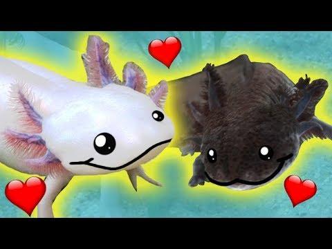 Axolotl Haltung 💖🐟 Wasserdrachen glücklich machen 🐉🐾 Tipps & Infos.