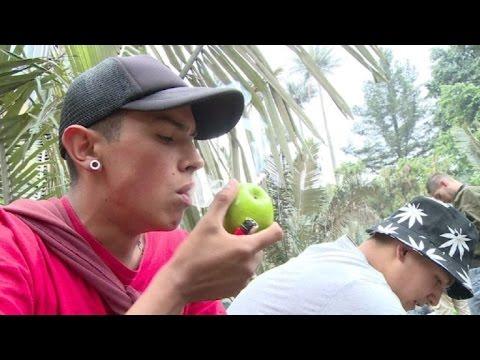 "Realizan ""fumatón"" de marihuana en Bogotá"