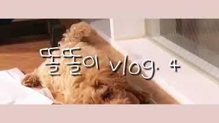 똘이의 일상 VLOG.4/사과 먹방,육포 간식 먹이기,…