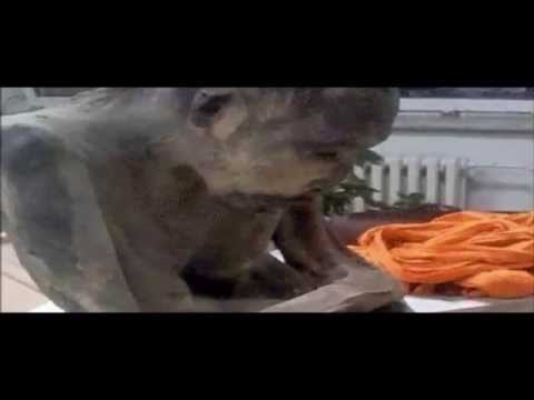 Mummified 200-Year-Old Monk Found In Mongolia