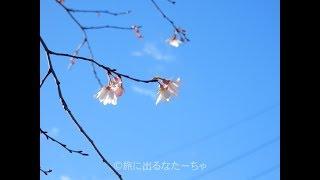 【三十路女の埼玉一周旅】ふじみ野・福岡高校お別れ会編
