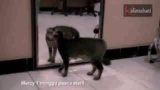 Kucing Takut Sama Cermin, Malah Ngajak Berantem