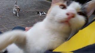 野良子猫を母猫の前で抱っこしてモフモフしたら。。。