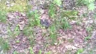 видео Платная рыбалка в Калужской области