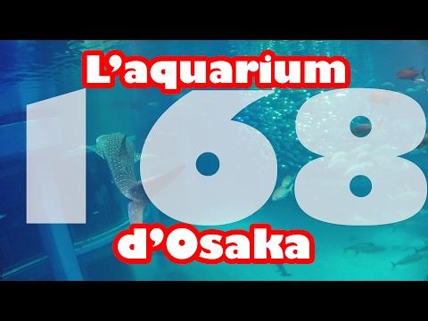 L'aquarium d'Osaka (vlog Japon #168)