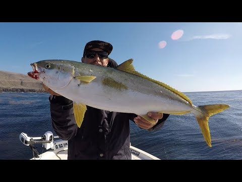Calico Bass Fishing With Surprise Yellowtails | San Clemente Island
