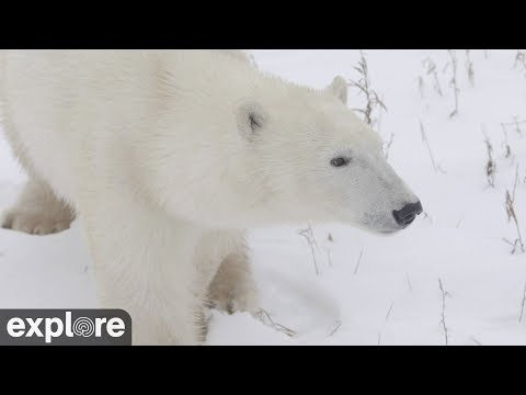Cape North Camera - Churchill Cam, Wapusk National Park powered by EXPLORE.org