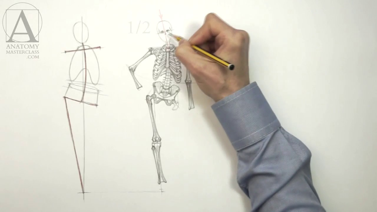 Human Body Skeleton Anatomy Master Class For Figurative Artists