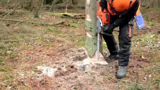 ECC2 - Basic tree felling techniques