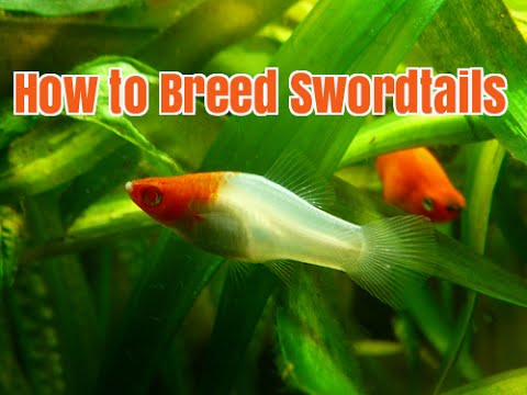 Fish Live: Tips & Cheats: Breeding list cheats - Gamers Unite!