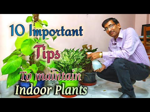 10 BEST TIPS To Maintain INDOOR PLANTS or HOUSE PLANTS.