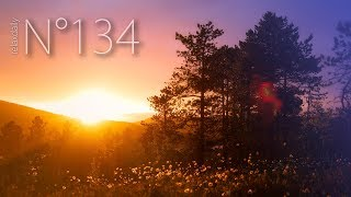 relaxdaily - Tiltvika [N°134]