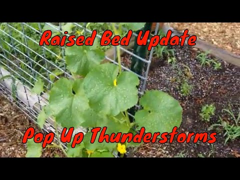 Raised Bed Update | Pop Up Thunderstorms