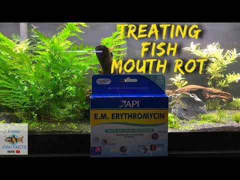 How To Identify And Treat FISH MOUTH ROT