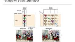 Perception: 3.2 Primary Visual Cortex (Fall 2016)