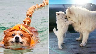 AWW CUTE BABY ANIMALS Videos Compilation cutest moment of the animals 2020 - Soo Cute! #58