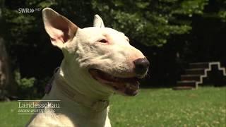 Warum werden Hunde aggressiv? | Gut zu wissen