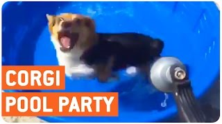 Corgi Loves Kiddie Pool | Pool Party