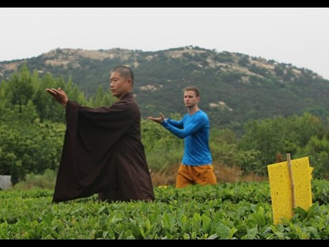 Learn Kung Fu in Dragon Mountain Martial Arts Academy in China