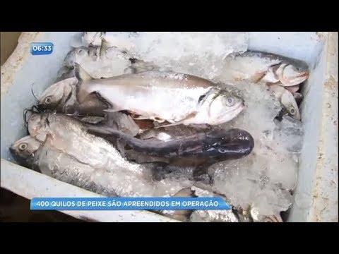 400 kg de peixes são apreendidos em operação do Ibama no Pará