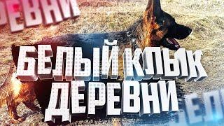Собака Дум и Белый Клык деревни Почему долго не встают уши С кем опасно гулять