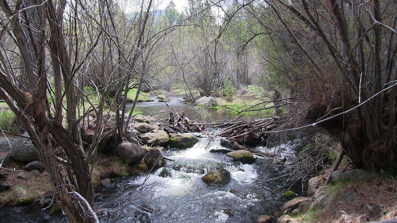 Fishing Santa Clara River, Utah's Dixie National Forest ...