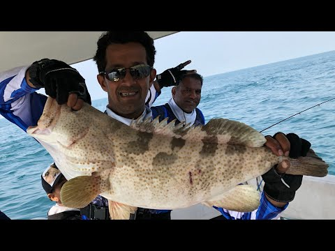 Last Offshore Fishing Trip Of 2018 In Qatar - Wakra