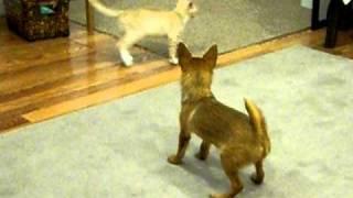 Milo & Otis Playing