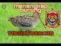 Totorialmenangkapburuhsawah Menangkap Burung Tiruk Berkik Di Rawa Bekas Tsunami  Mp3 - Mp4 Download