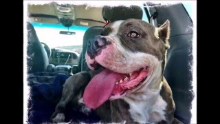 Mack- The Killing Of Innocence By BSL- Rebel Souls Rescue