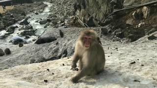2月末に長野県の地獄谷野猿公園へおサルさんに会いに行ってきたときの様...