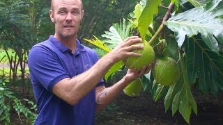 Hana, Maui - Eating Breadfruit at Kahanu Garden