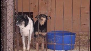Приют для бездомных собак