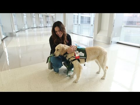 Texas Children's Therapy Dog Program