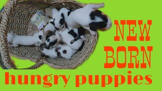 New born hungry crying puppies 1