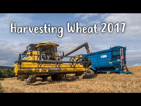 Harvesting wheat 2017 - JDS Contracts