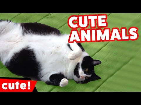 Funniest Pet & Animal Clips, Bloopers, Outtakes & Moments Compilation 2016 | Kyoot Animals