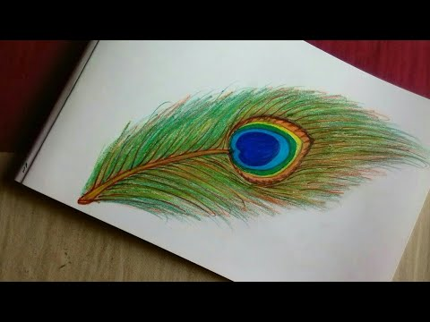 how to draw a realistic peacock feather